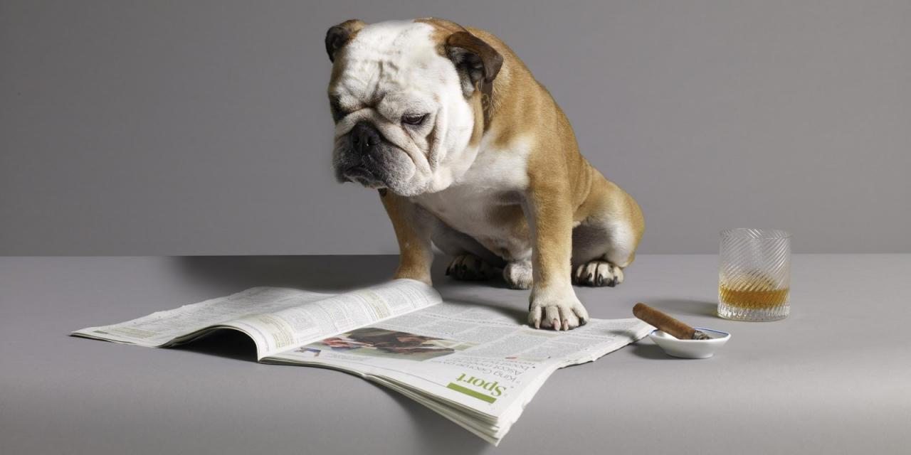 o-DOG-WITH-NEWSPAPER-facebook.jpg